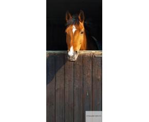 D3P-HORSE-001